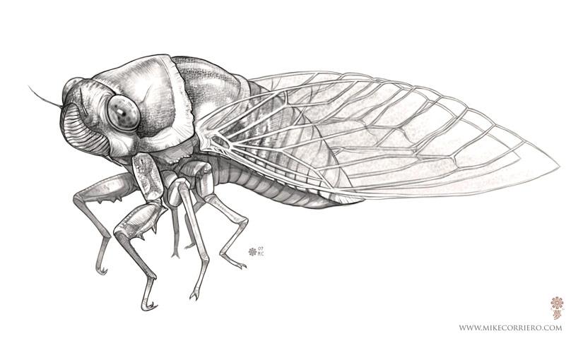 cicada – The ...